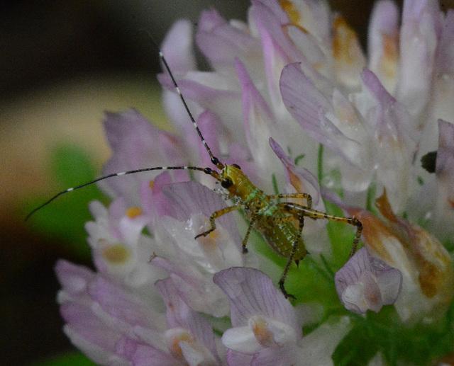 The little katydid, by itself