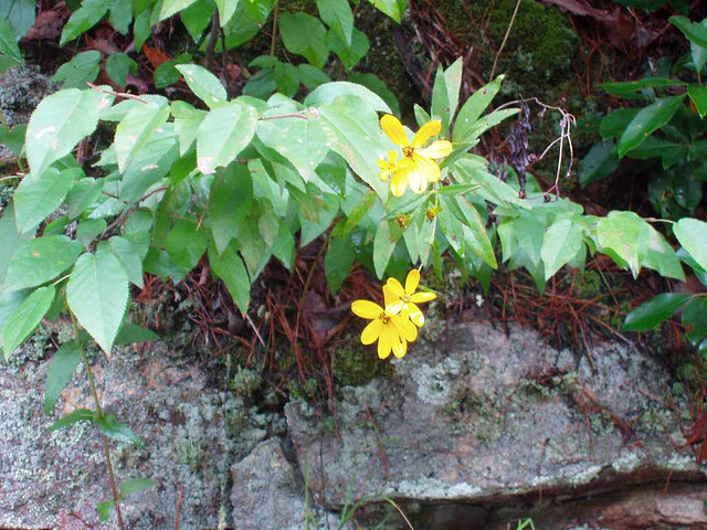 Flower @ Babcock State Park
