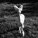 summer alpaca ;-)