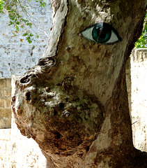 Tree with an Eye on the Tourists
