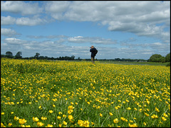 photographer in buttercups