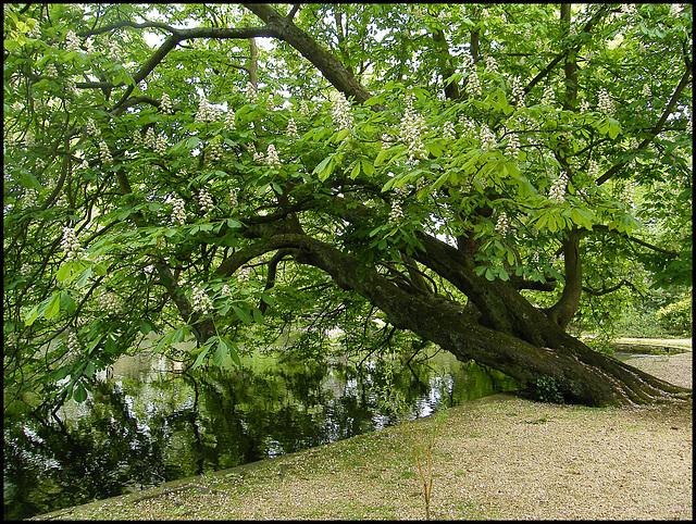 Worcester College chestnut