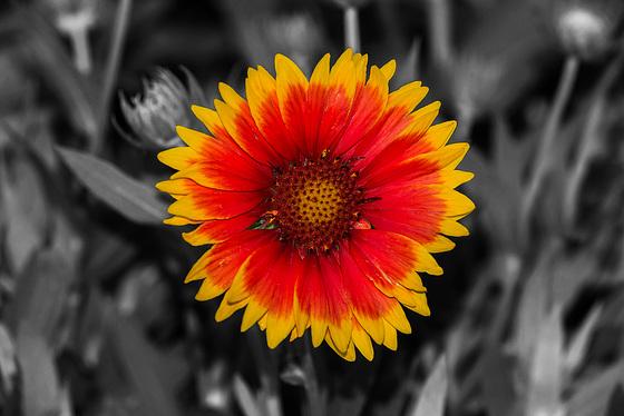 BESANCON: Une fleur.