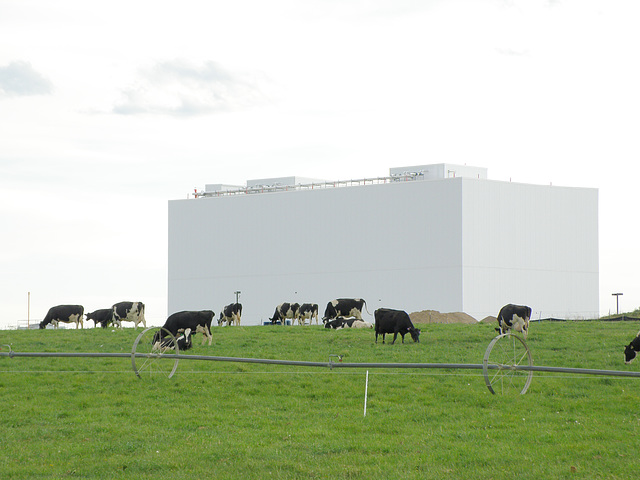 Cows and milk plant