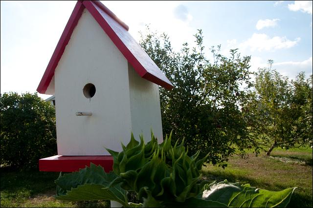 Birdhouse, with Incipient Sunflower