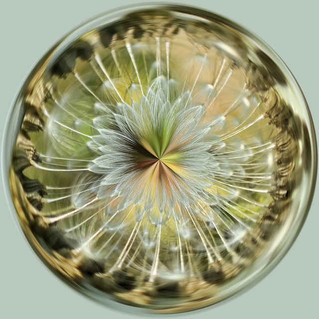 Dandelion Seedhead ORB