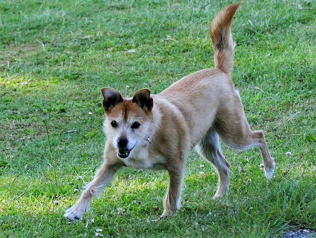 Hundesprint