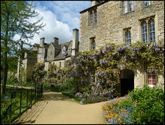 Worcester College wisteria