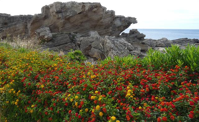Spring Flowers at Kallithea