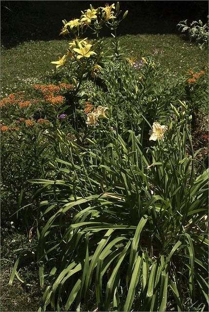 The Back Corner Garden