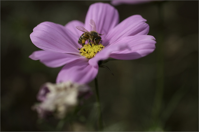 There's a Bee in the Cosmos