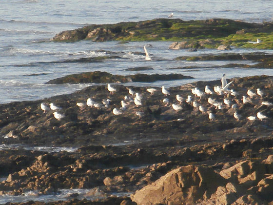 Loads of seagulls sat there watching the sun go down