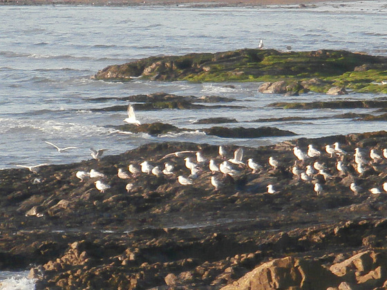 A gathering of seagulls watching the sun