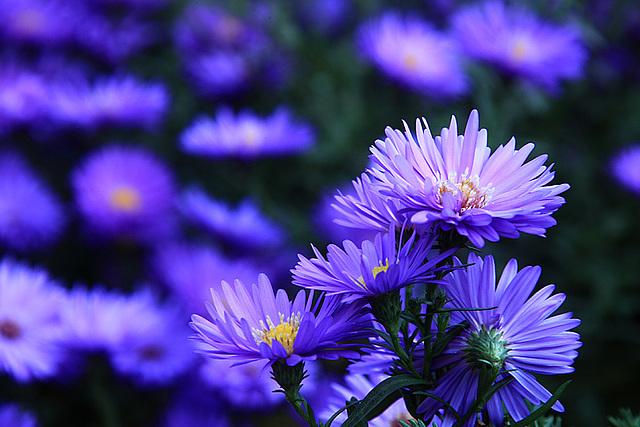 Blueing
