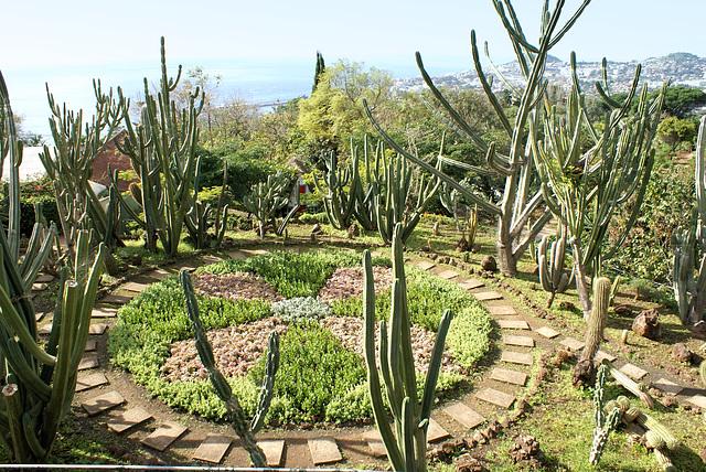 Madeira. Monte. Botanischer Garten.  ©UdoSm