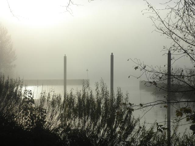 Morgennebel an der Elbe