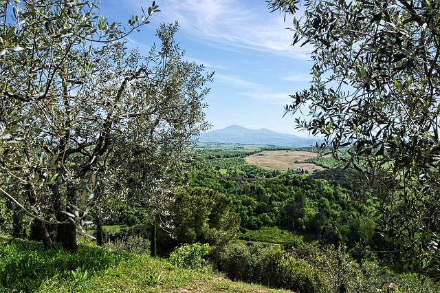 Near Castelmuzio