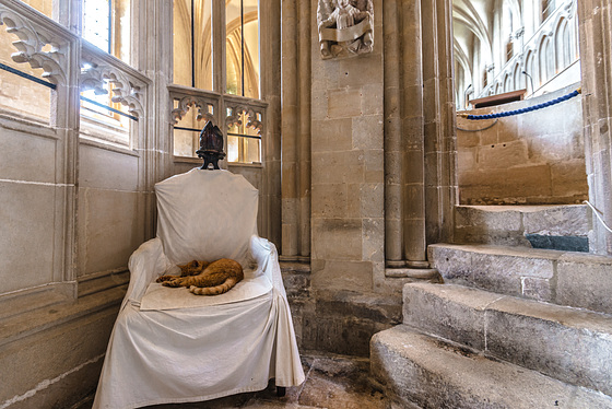 Wells Cathedral Cat - 20140807