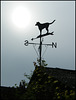 prevailing hound