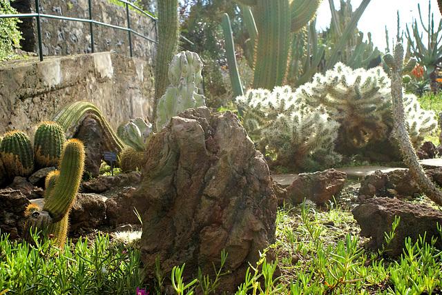 Madeira. Monte. Botanischer Garten. Kakteen. ©UdoSm