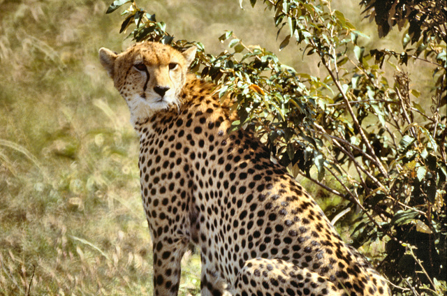 Masai Mara #10