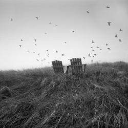 where the sea birds fly
