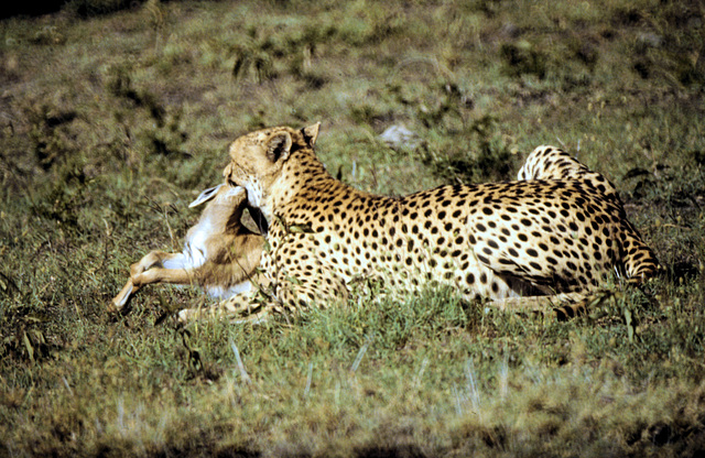 Masai Mara #11