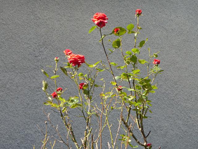 Mon petit jardin