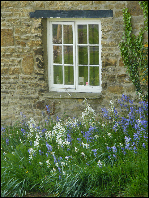 bluebells by a cottage window