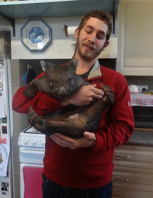 Shanus the wombat