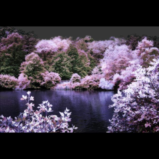 Faux infrared, Henrico VA