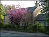 roadside evening blossom