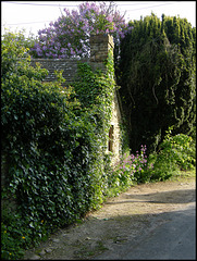 spring evening in the lane