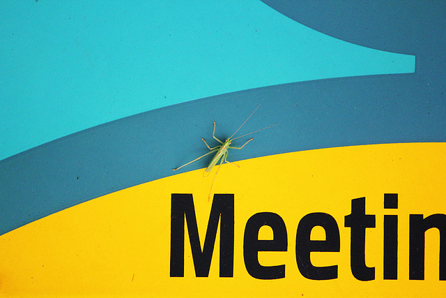 Meeting with a cricket - Amberley - 29.8.2013