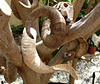 Horns in a Tree in the Grounds of the Turkish Library