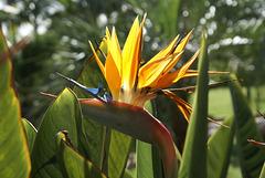 Madeira. Funchal. Die Blumeninsel und die Insel des ewigen Frühlings. ©UdoSm