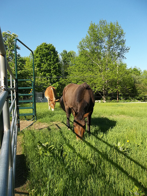 first day on pasture, 2014