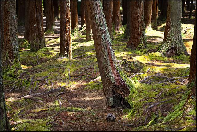 wood_walk