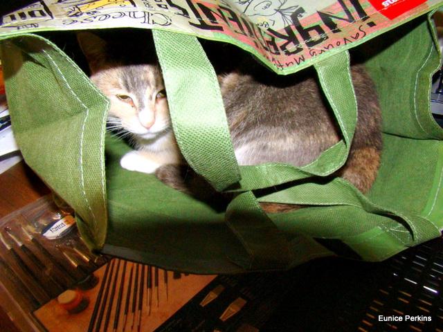 Honey in Shopping Bag.