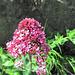 08 pretty flower