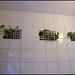 convenience wall plants