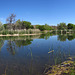 Lagoon at Dead Horse Ranch State Park