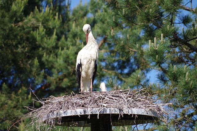 Parc aux oiseaux Villard les Dombes
