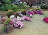 Balboa Park Succulent Garden