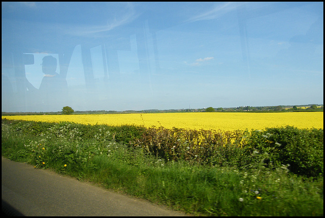 yellow is for field