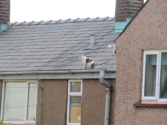 03 cat on a roof