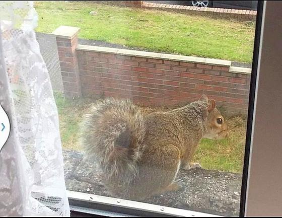 04 squirrel on window sill