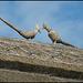 pheasant thatch