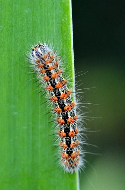 Colorful Crawler