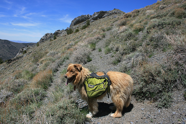 What the well-dressed trail dog wears...